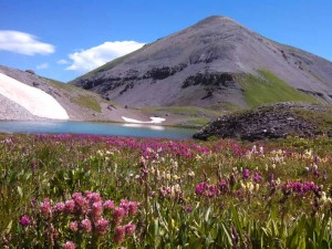 Wild flowers near one of the Blue Lakes, Uncompahgre National Park