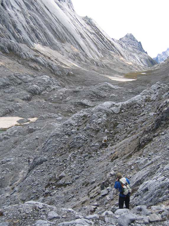 Carstensz Yellow Valley